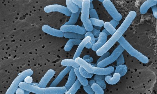 Ook na darmoperatie beter af met probiotica 3