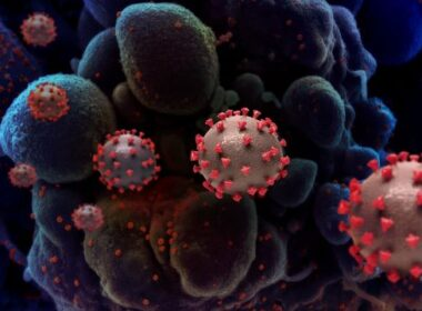 Spermidine ook goed tegen Sars-Cov2 4