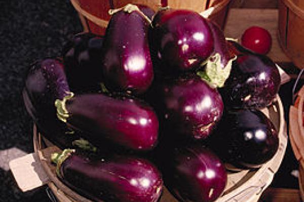 Aubergine en tomaat nog gezonder met olijfolie 3