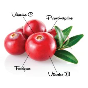 Cranberry 3