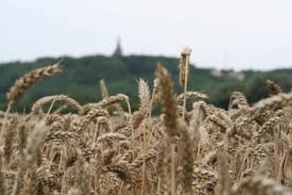 'Glutenvrij geeft verhoogd risico' 3
