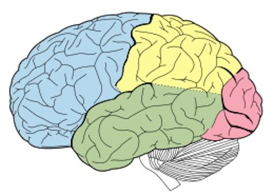 Onze voeding ook van invloed op hersenen 3