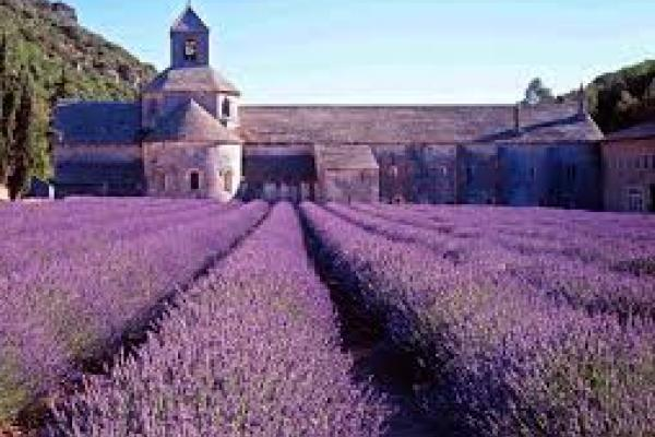 Angstremmer lavendel onder de loep 3
