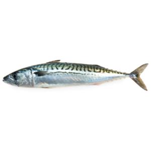 Makreel 3